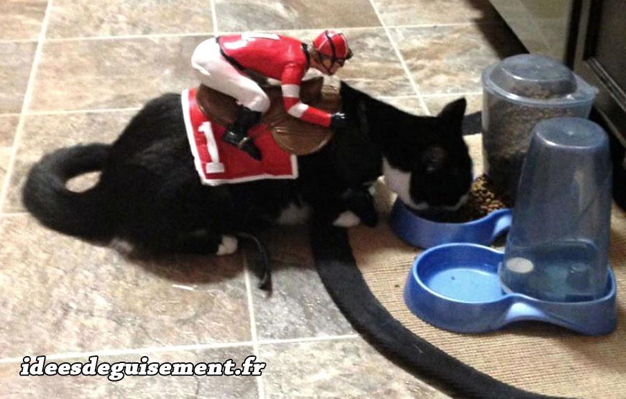 Déguisement chat noir de course Jockey