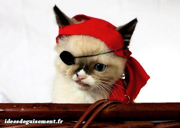 Cache œil et foulard rouge de pirate