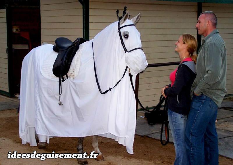 costumes pour animaux chevaux