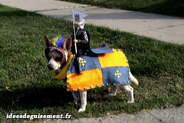 Déguisement chien en cheval de chevalier