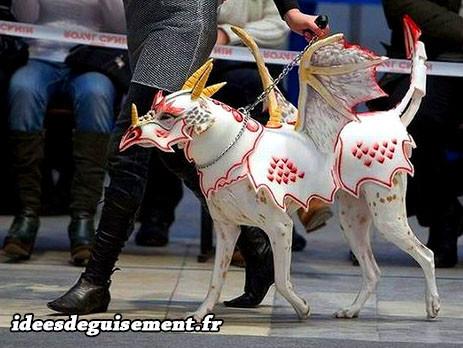 chien dragon cheval licorne blanc a ailes idees originales deguisement costume et cosplay pour animaux domestiques