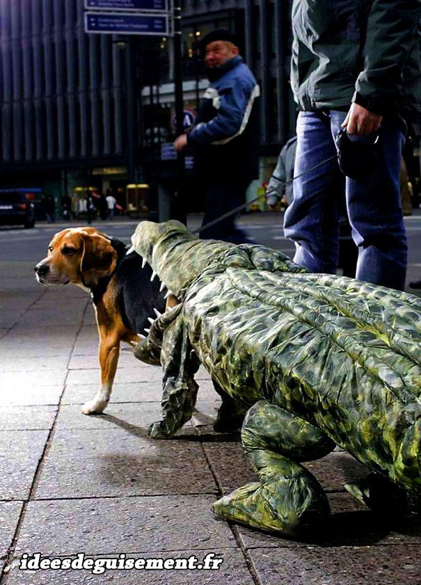 Déguisement en chien mangé par un crocodile