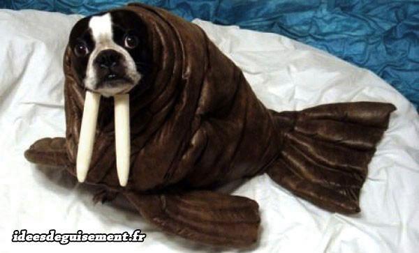 Déguisement chien en morse otarie phoque