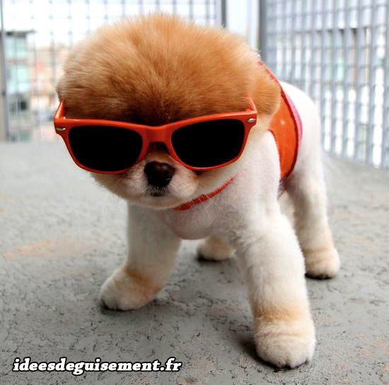 Déguisement chien orange classe