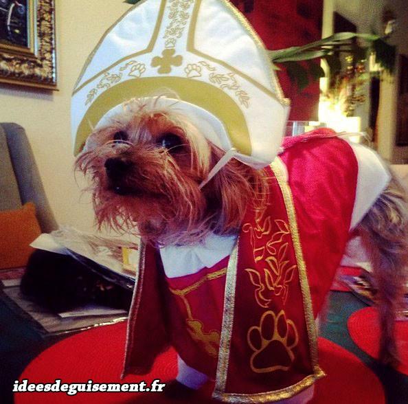 Déguisement chien en pape
