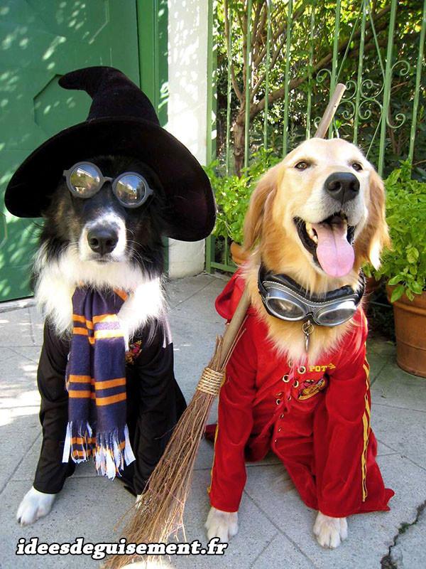 Costumes de joueurs de Quidditch