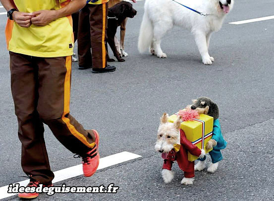 Déguisement marrant de livraison de cadeau pour chien