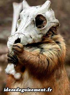 Déguisement écureuil en osselait ossateur pokémon