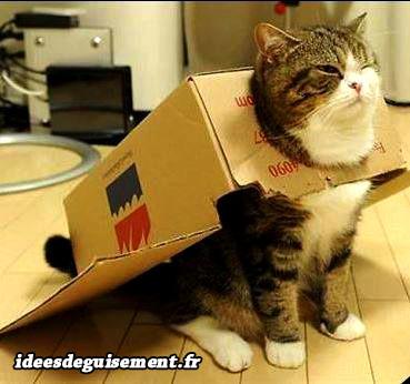 Déguisement chat superchat supercat carton