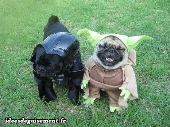 Déguisement de Dark Vador et Yoda pour chiens