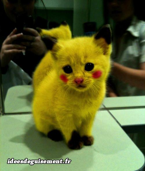 Déguisement chat en Pikachu
