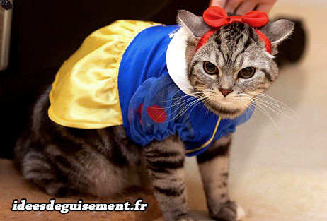 Id es de d guisements costumes dr les marrants fun - Dessin de chat rigolo ...