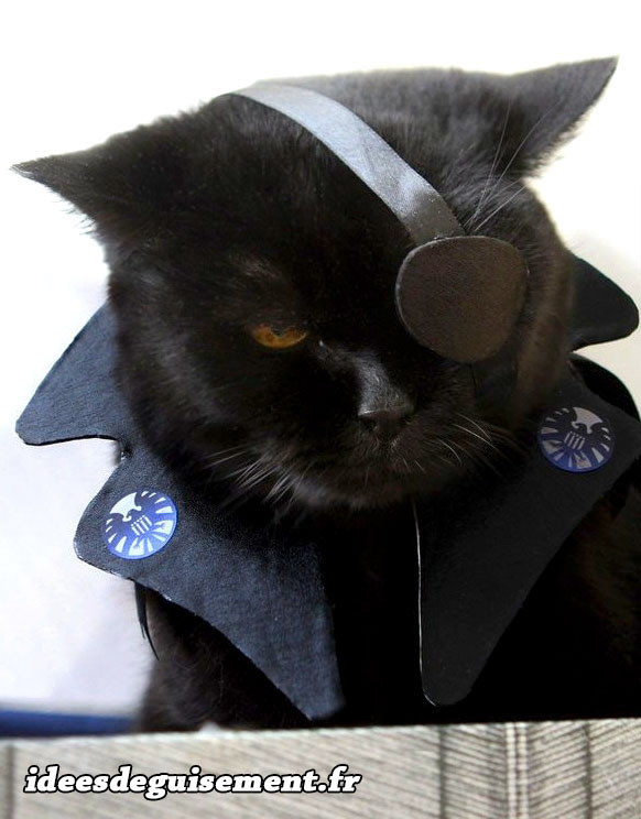 Déguisement chat pirate noir