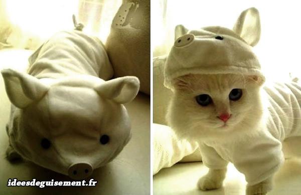 Déguisement chat de petit cochon blanc