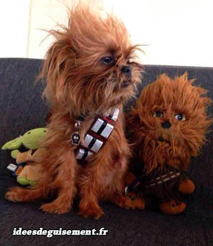Costume de Chewbacca réaliste pour chien
