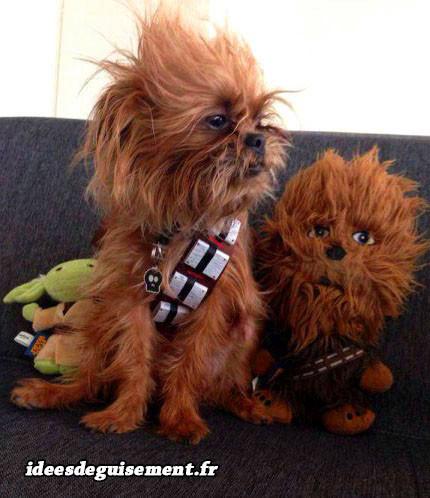 Déguisement de Chewbacca