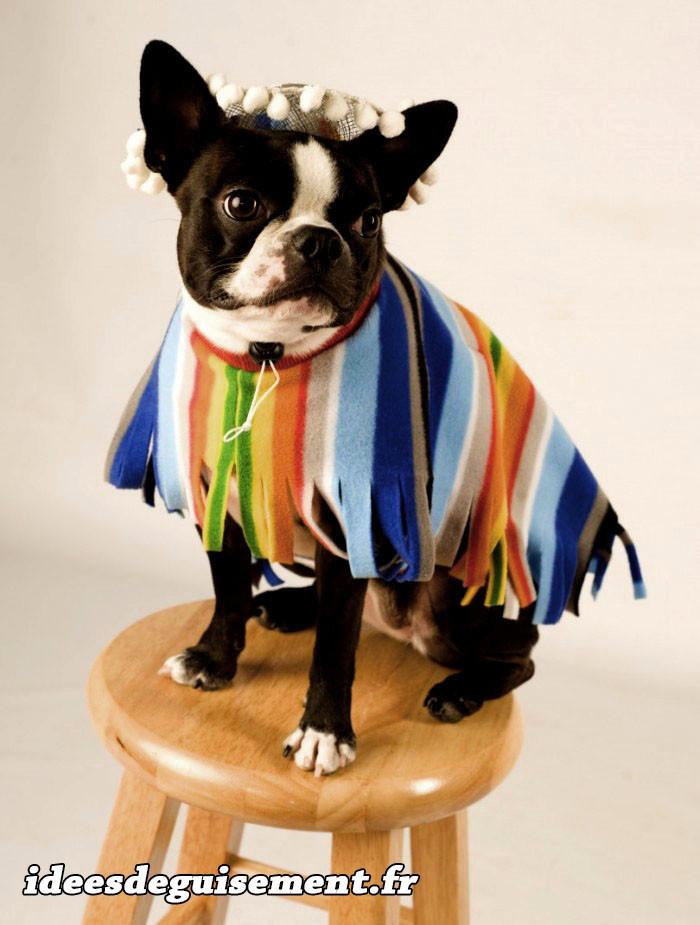 Déguisement de Poncho Mexicain pour Bulldog
