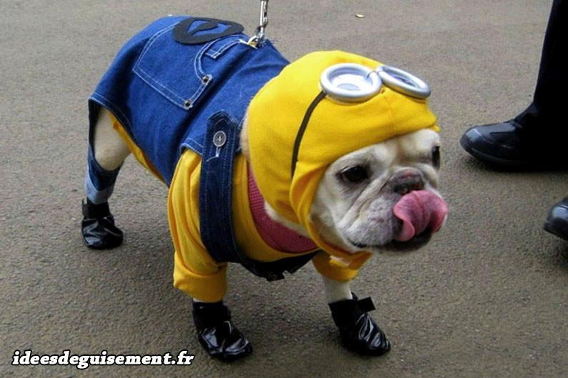Déguisement de minion pour chien bulldog