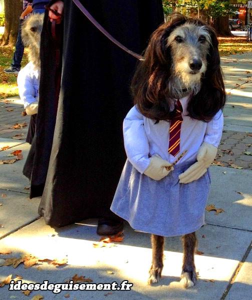 Déguisement de sorcier d'Harry Potter pour chien