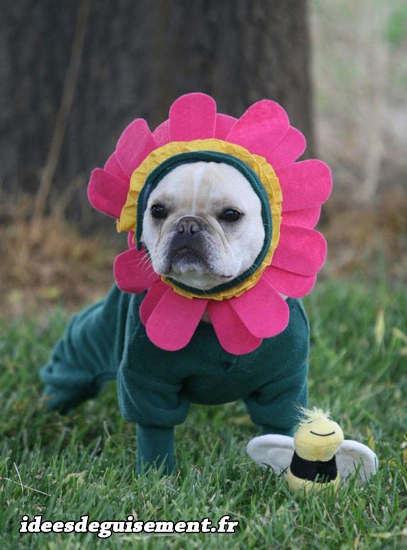 Déguisement chien fleur et abeille
