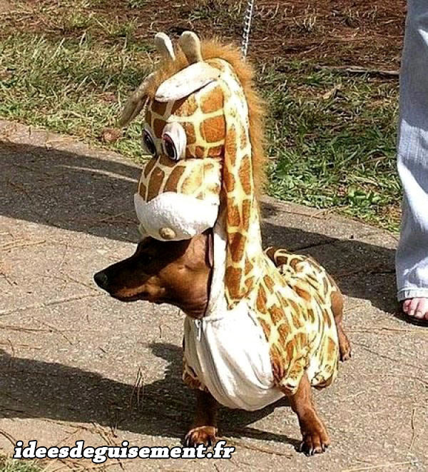 Déguisement chien girafe