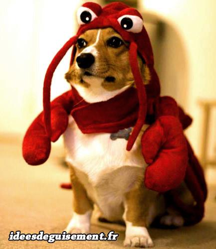 Capuche de Langouste ou crabe