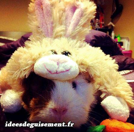 Déguisement de cochon d'inde avec bonnet de lapin