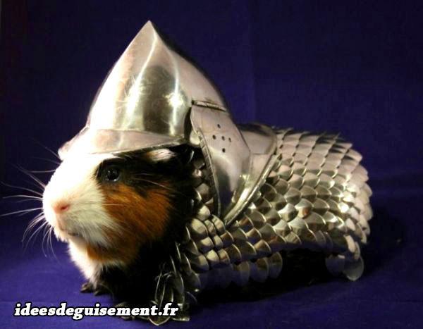 Déguisement de chevalier armure agentée pour cochon d'inde