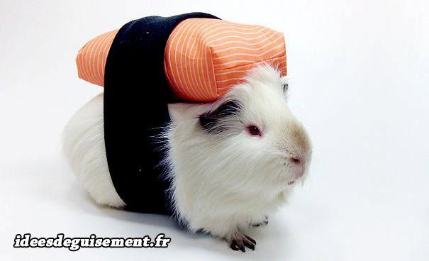Déguisement en sushi pour cochon d'inde