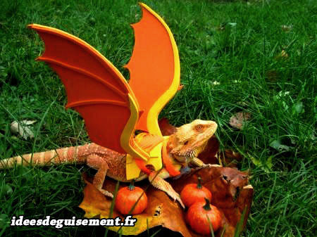 Déguisement d'iguane lézard en dragon dracaufeu drogon orange