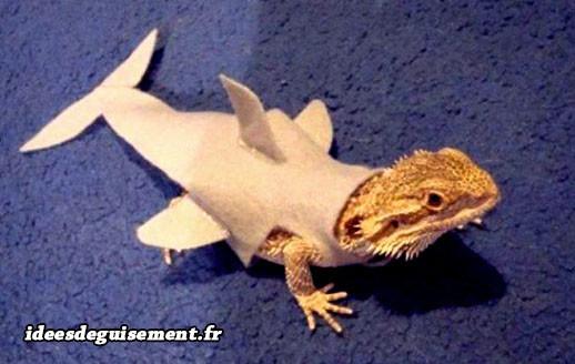 Déguisement d'iguane en requin