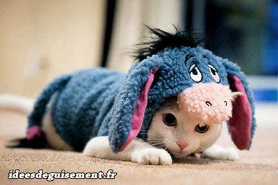 Déguisement de Bourriquet pour chat